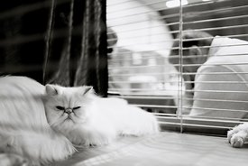 Witte kat in kooi | White cat in cage