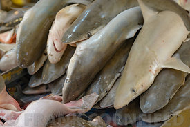 Lots of small juvenile shark on sale at a market in Singapore.