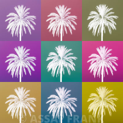 Collage of Palm tree