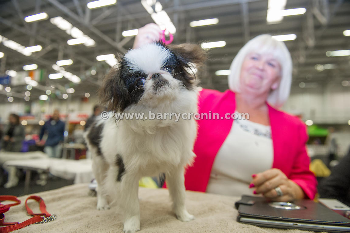 5th October, 2014.IKC (Irish Kennel Club) International show at Cloghran, Dublin. Pictured is Jeanette Cooper from Belfast wi...