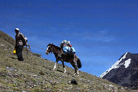 Muleteer and mule carrying trekking kit on hillside, Cordillera Apolobamba , Bolivia