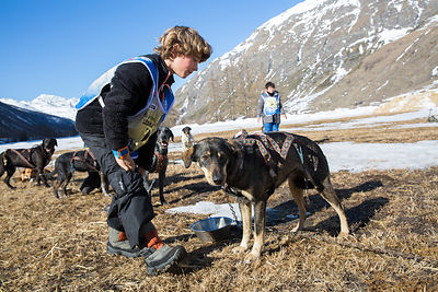 Eliott, 8 ans s'occupe d'installer le harnais sur son chien de traineau, Bessans, France / Eliott, 8 years old, is installing...