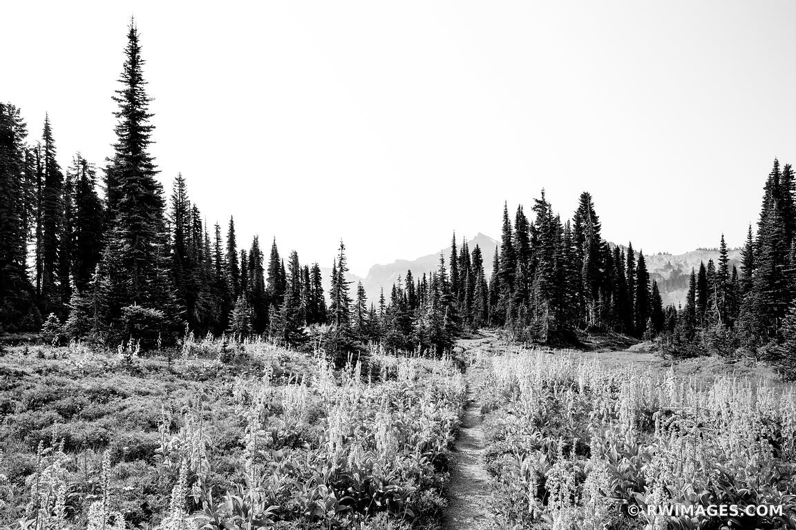 MOUNTAIN VALLEY TRAIL MOUNT RAINIER NATIONAL PARK WASHINGTON STATE BLACK AND WHITE