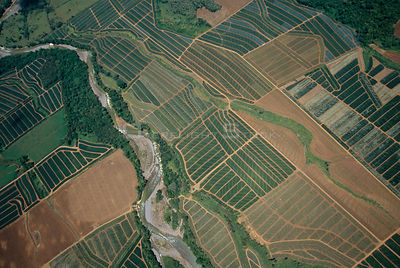 Aerial view of river and Pineapple plantations, Costa Rica, Central America 2006