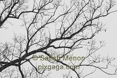 Tree Branches Abstract, Ellicott City, Maryland, USA