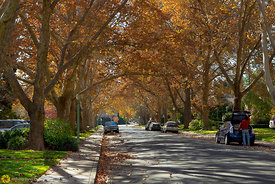 Fall Collors in Midtown Sacramento #1