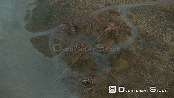 Aerial overhead shot zoom out circle over tops of baobab trees on edge of salt pan in desert at sunset sunrise Botswana