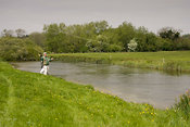 Trout fishing on River Anton, Hampshire, England