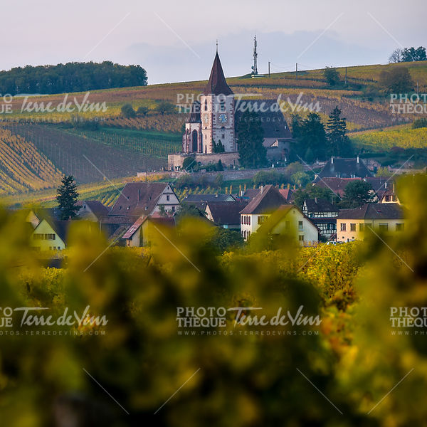 Fortified and medieval church in vineyard in autumn
