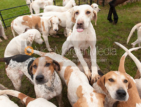 Cottesmore Hounds - The Cottesmore Hunt at Burrough House 18/12