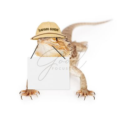 Lizard Safari Guide