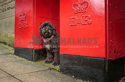 Fluffy dog sat between red post boxes