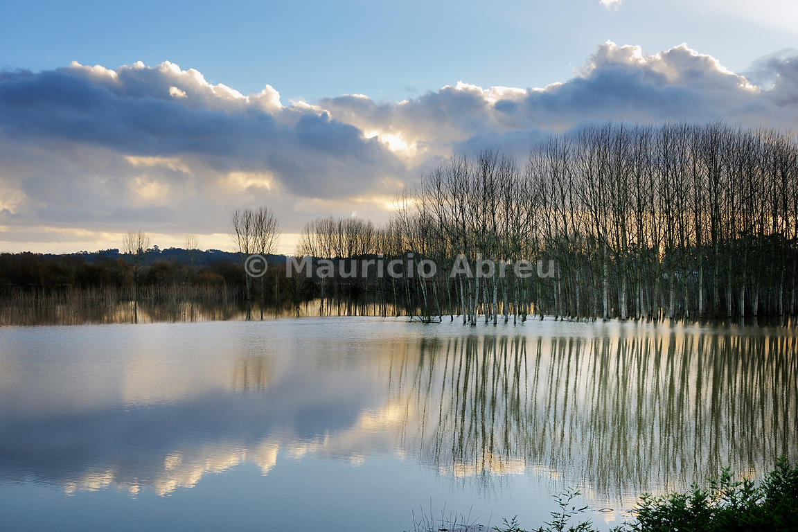 Vouga river and poplars at dusk, Águeda, Portugal