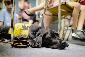 black labrador retriever service dog sleeping on classroom floor