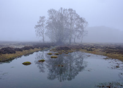 Foggy_Forest_Jan_026
