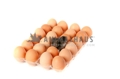 Newly hatched chicken standing among brown eggs