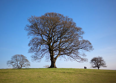 Little Longstone tree