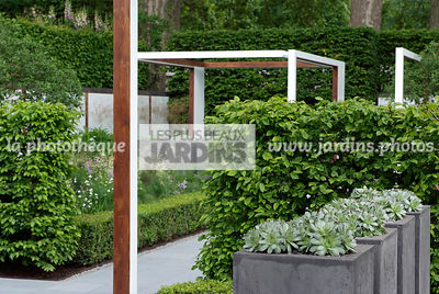 Container, Contemporary garden, Digital, Hedge, Pergola, Pot