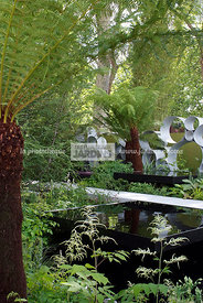 Contemporary garden, Digital, Geometrical pool, Tree Fern, Trellis, Tropical garden