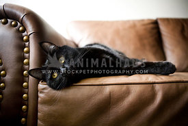black cat laying on couch
