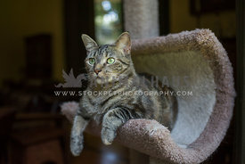 tabby cat sitting in a cat tower