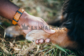 African American male hand holding a dog's paw