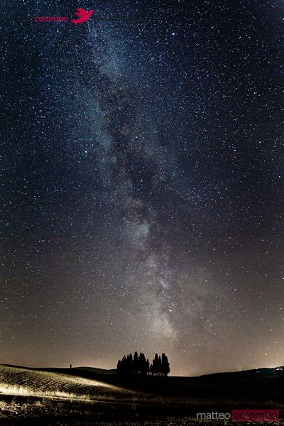 Milky way over cypress grove in Tuscany, Italy