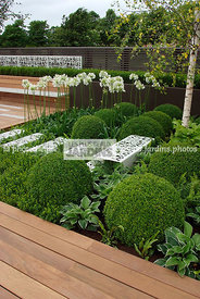 Agapanthus, Ball shaped, Buxus, Contemporary garden, Perennial, Sphere shaped, Topiary, Common Box, Digital, Scenery