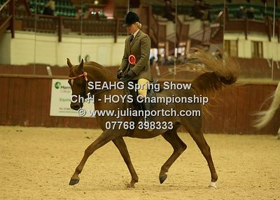 South East Arabian Horse Group Spring Show 2016