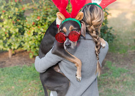 animal photography (dog) of a young woman with her coonhound costumed for Christmas