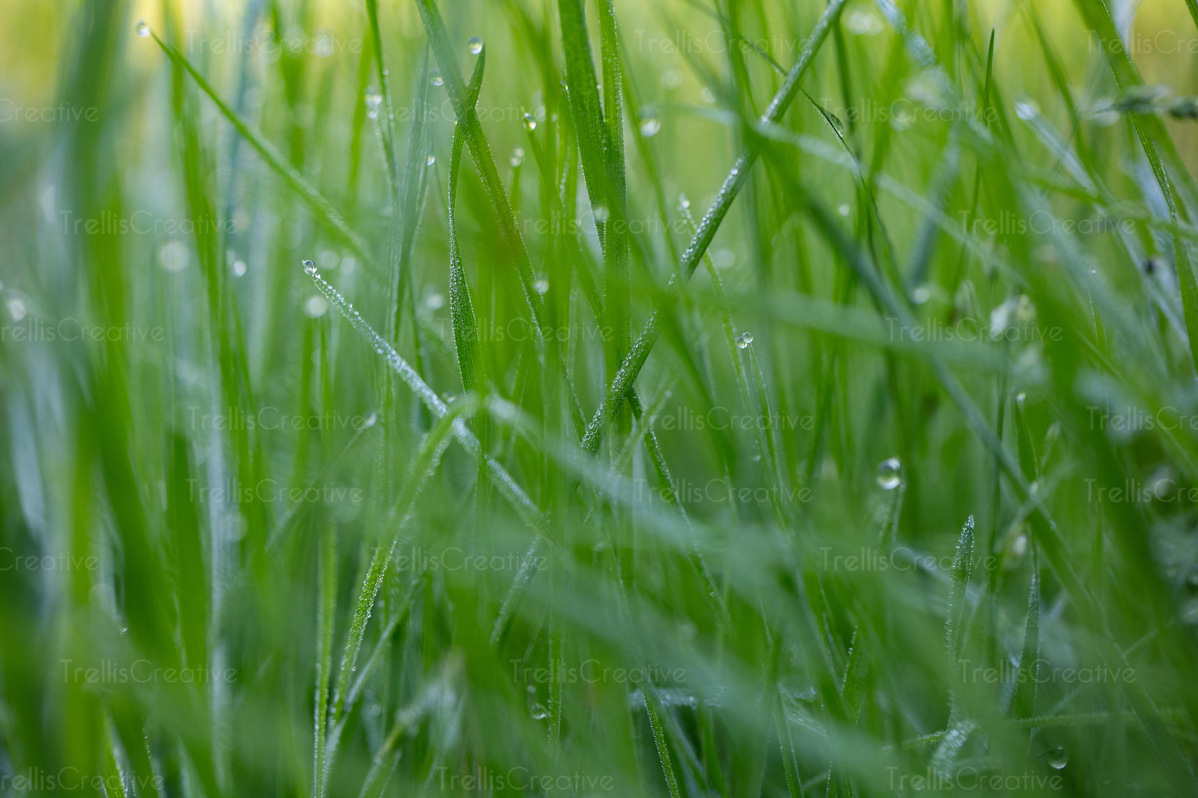 Close-up of green grass blades