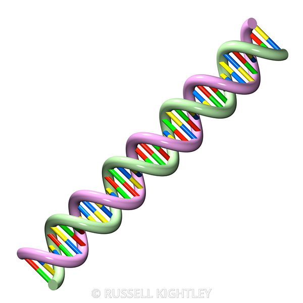 DNA #34 on a white background