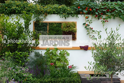 garden designer, Olive tree, Small garden, Tropaeolum majus, Urban garden, Digital, Foliage wall, Green wall, Vegetation wall, Wall decoration