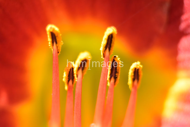 Extreme close up of Deep oragne flower.