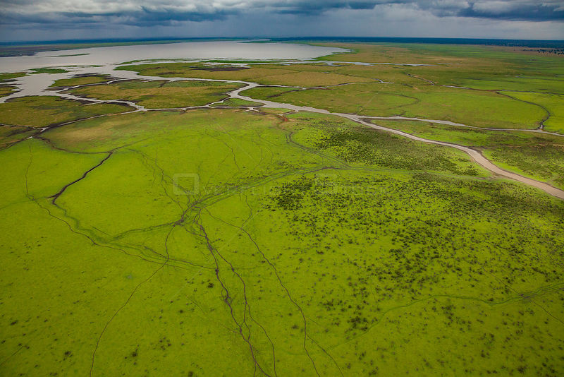 Aerial view of the edge of Lake Urema with animal trails, Gorongosa National Park, Mozambique. July 2014