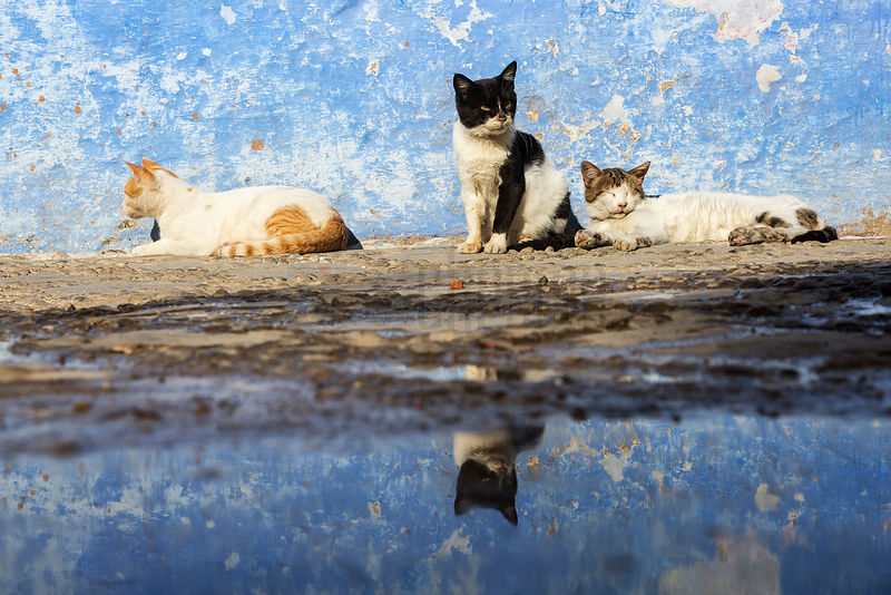 Low Angle of Street Cats