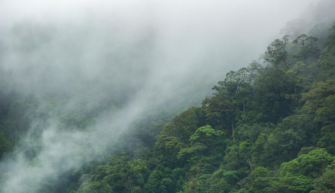 A familiar sight to most who have seen rainforest - clouds moving through the Caribbean Cloud Forest in the central highlands...