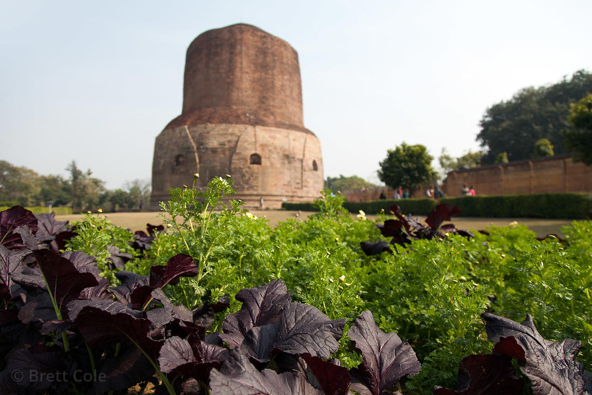 The Dhamekh Stupa, Sarnath, India.