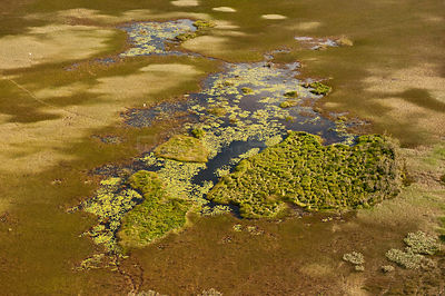 Aerial view of seasonally flooded Savannah grassland, North Rupununi, Guyana, December 2009