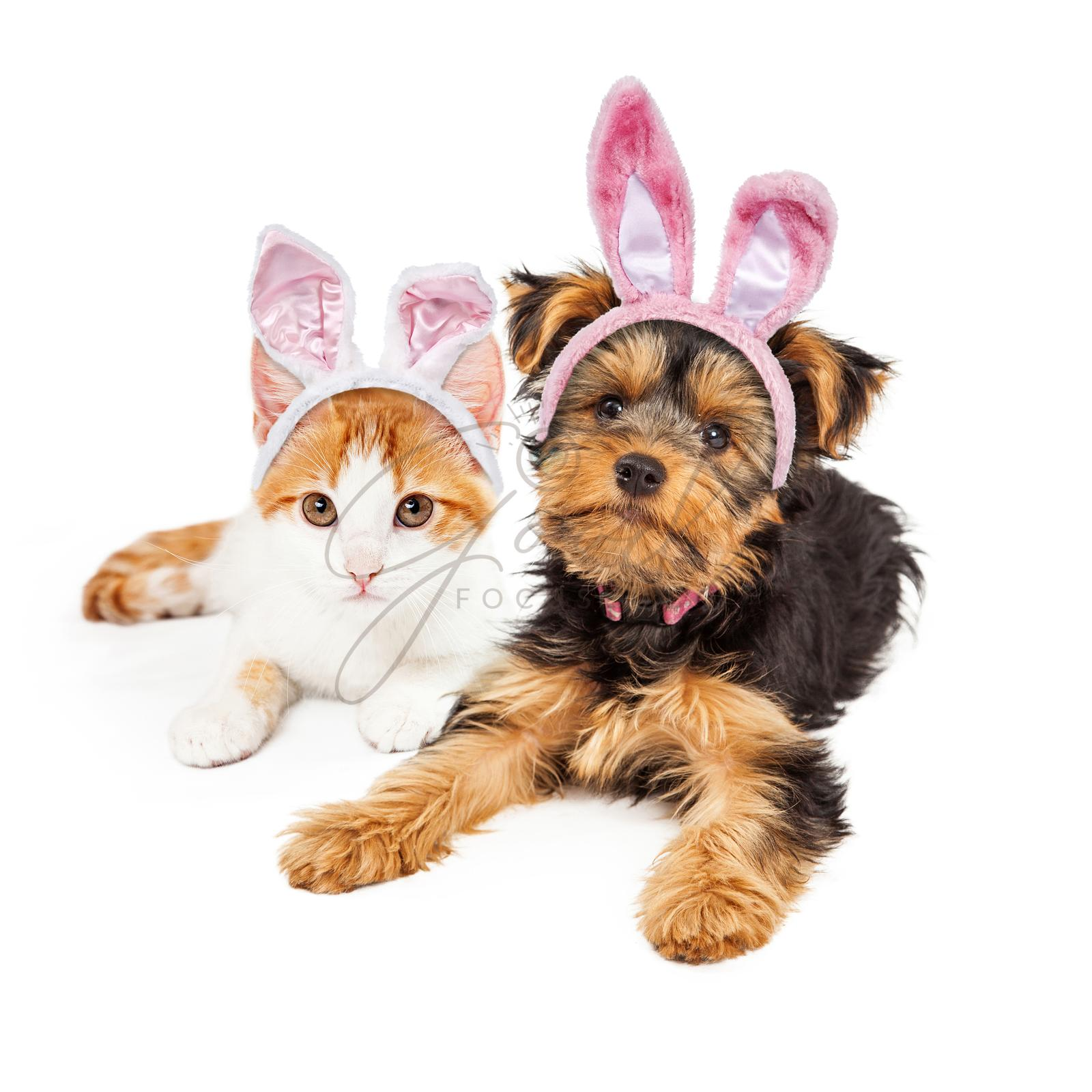 Easter Bunny Yorkshire Puppy and Kitten