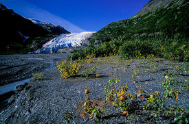 Leading Edge of Glacier