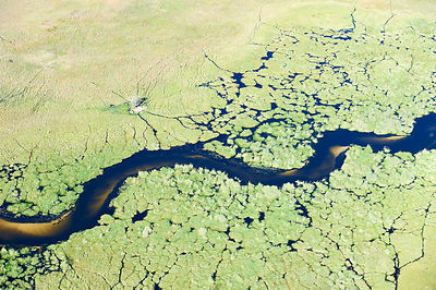 Aerial view of the Okavango delta,  with a meandering channel with a sandy bed in the swamp, Botswana, Africa  ;Aerial view o...