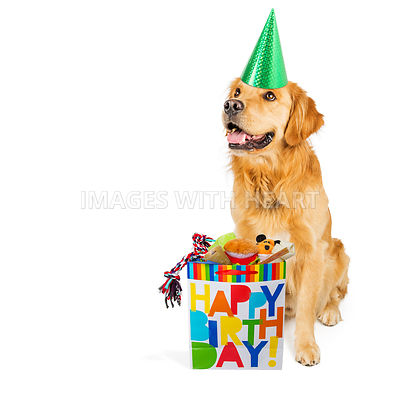 Birthday Dog With Present
