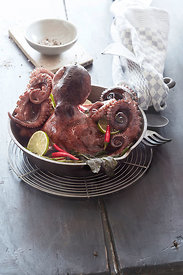 Seafood Story, Octopus