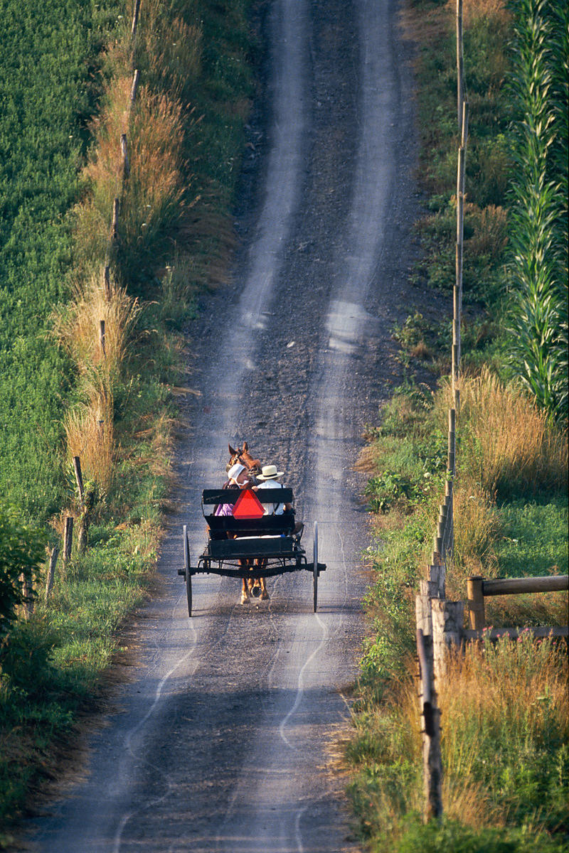 Amish Buggy Driving Down Dirt Road