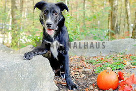 Mixed breed shelter dog adoption photo