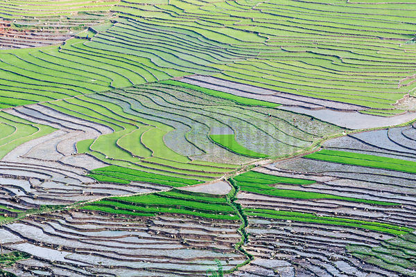 Elevated View of Rice Paddies