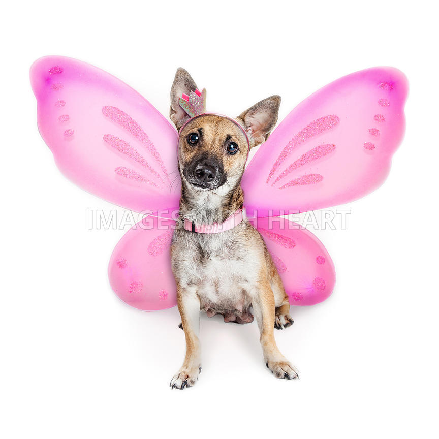 Cute Dog Wearing Pink Fairy Wings