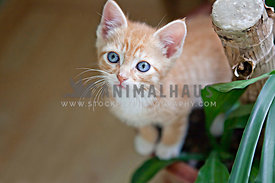 orange table cat looking up on potted plant