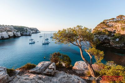 Tree and mediterranean sea at sunrise, Menorca